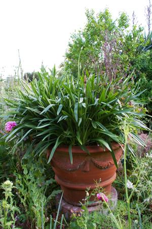 Whichford  potに出会える場所in England_d0229351_18105014.jpg