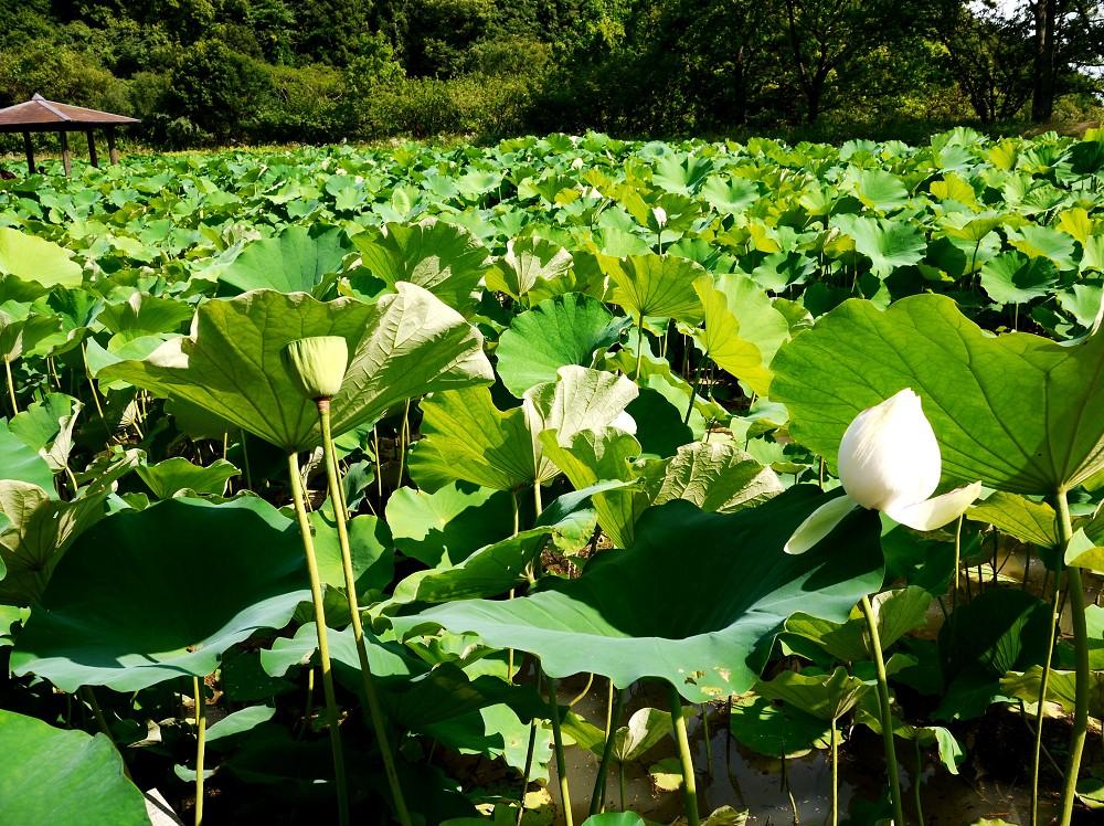 和歌山県植物公園緑花センター _b0093754_2226169.jpg