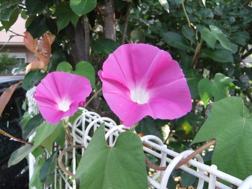 夏休み ブログもしばらく 夏休み_f0101201_22382988.jpg