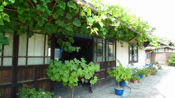 ぶどうを求めて「五果園」さん  (滋賀県東近江市)_d0108737_14253462.jpg