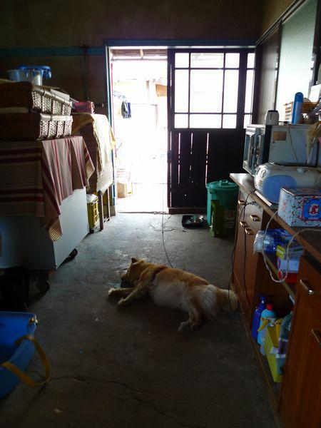 ぶどうを求めて「五果園」さん  (滋賀県東近江市)_d0108737_14254275.jpg