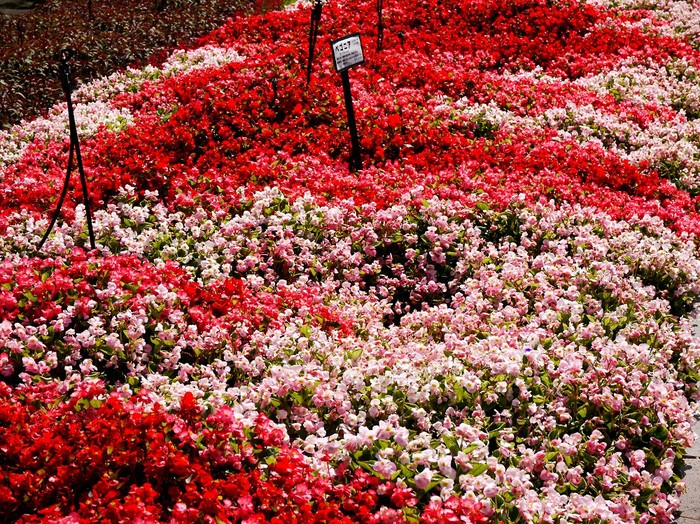 和歌山県植物公園緑花センター _b0093754_22282316.jpg