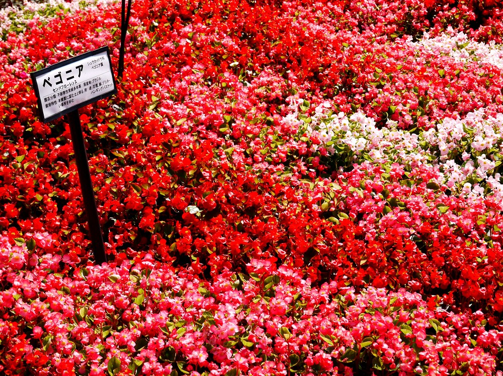 和歌山県植物公園緑花センター _b0093754_22283648.jpg