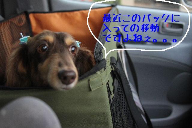 おはよぉ~ございます!!_b0130018_923193.jpg