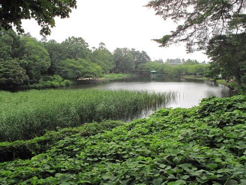 夏 大宮公園_d0150720_12534437.jpg