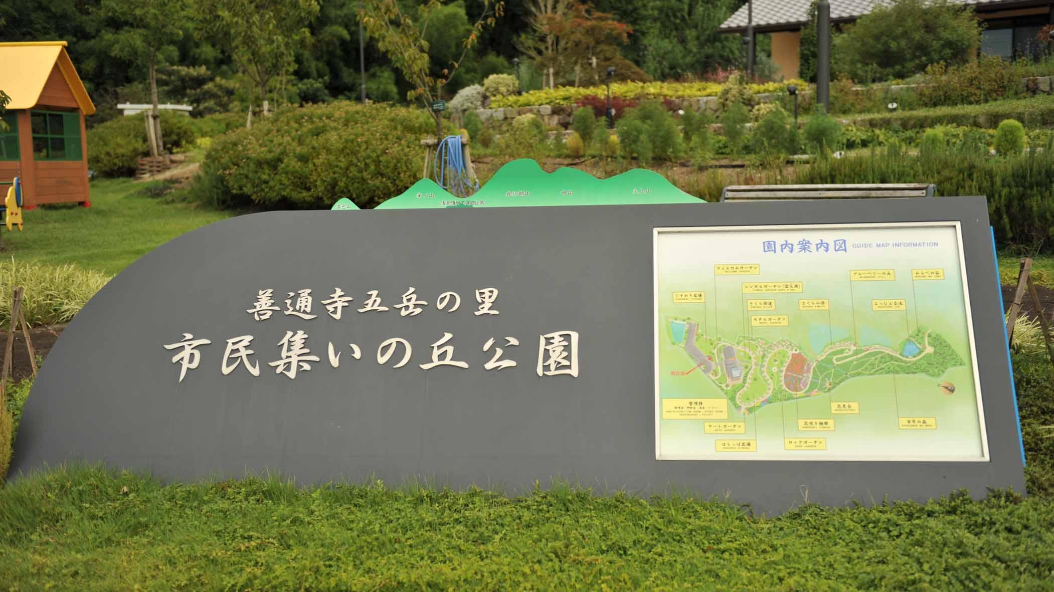 善通寺市のひまわり_d0246136_2122579.jpg