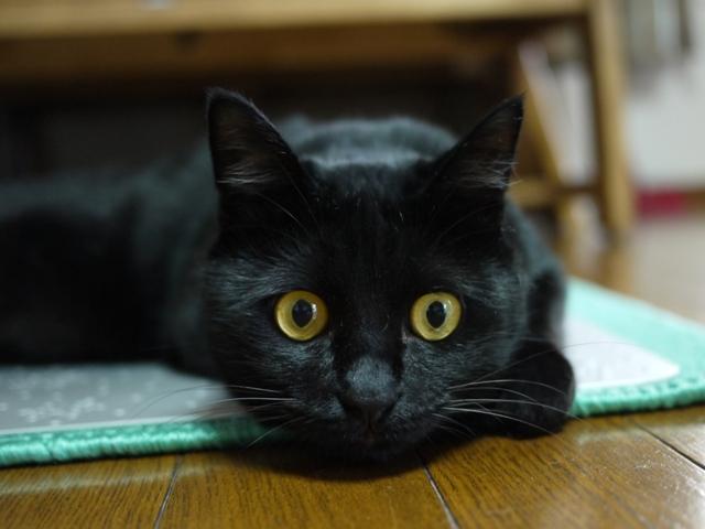猫のお友だち クロくん編。_a0143140_2344484.jpg