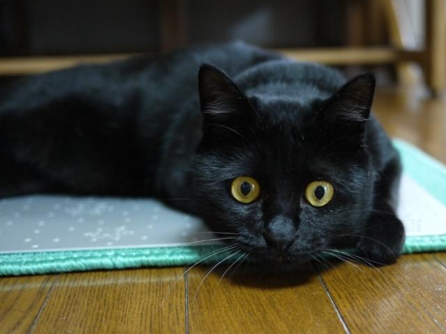 猫のお友だち クロくん編。_a0143140_2355274.jpg