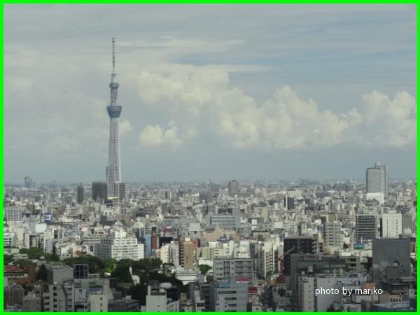 文京区役所から_d0165645_11275442.jpg