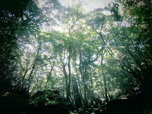 森は涼しい。_b0160957_964498.jpg