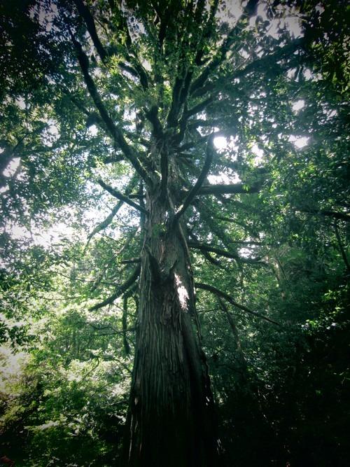 森は涼しい。_b0160957_981396.jpg