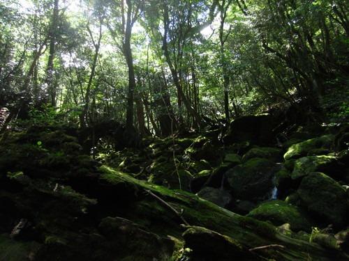 森は涼しい。_b0160957_994269.jpg