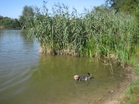ドイツで泳ぐ ~バイエルンの池編_f0116158_2020022.jpg