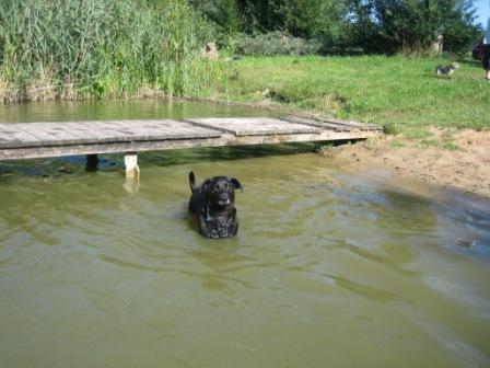ドイツで泳ぐ ~バイエルンの池編_f0116158_20201549.jpg