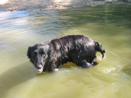 ドイツで泳ぐ ~バイエルンの池編_f0116158_20202872.jpg
