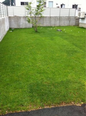 今日の芝生_e0246271_024252.jpg