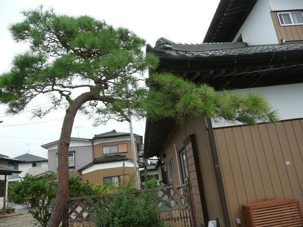 8月15日  筑波実家へ盆参り_d0249595_15321271.jpg