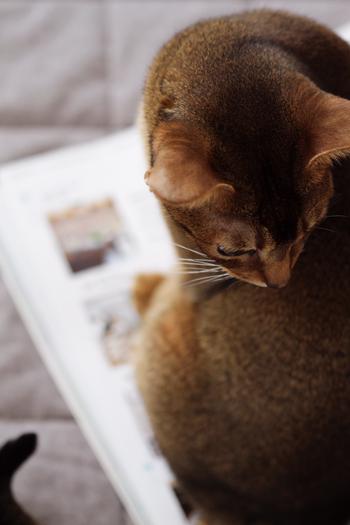 [猫的]On the book_e0090124_23524797.jpg