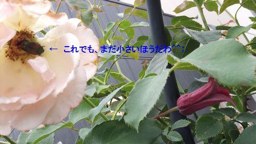 d0232346_23212795.jpg