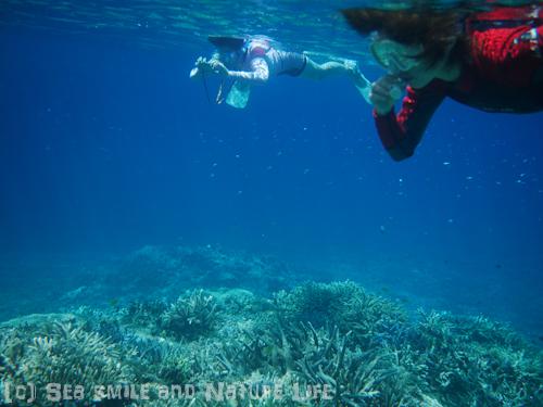プールのような海で♪_a0155606_2324263.jpg