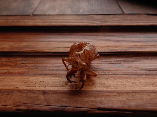 2012年「虫からの警告」☆_a0125419_9282692.jpg