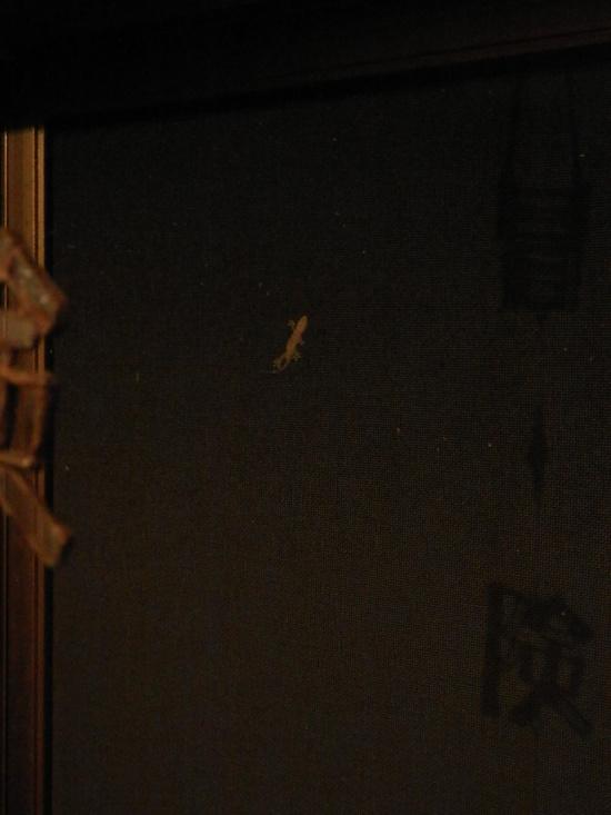 2012年「虫からの警告」☆_a0125419_993077.jpg