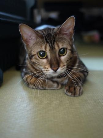猫のお友だち ナナちゃんミーちゃん編。_a0143140_22125658.jpg
