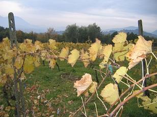 ルッカ 回想記 サンマルティーノ農園訪問_a0154793_1144034.jpg