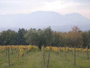 ルッカ 回想記 サンマルティーノ農園訪問_a0154793_114972.jpg