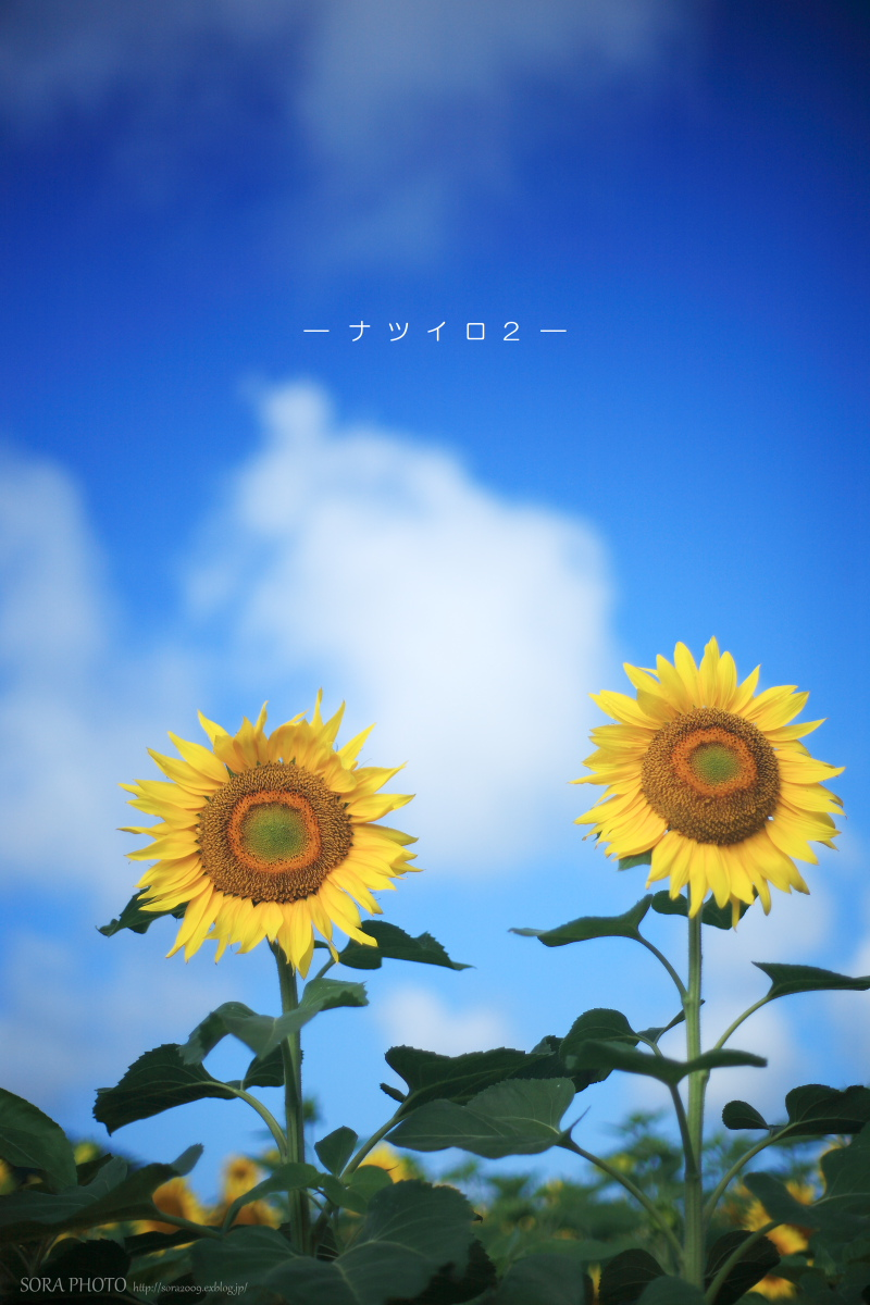 b0167798_410195.jpg