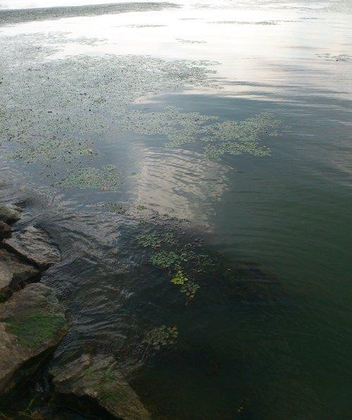 釣果報告 『琵琶湖でナイスフィッシュ連発!!』 FB1_d0145899_1451822.jpg