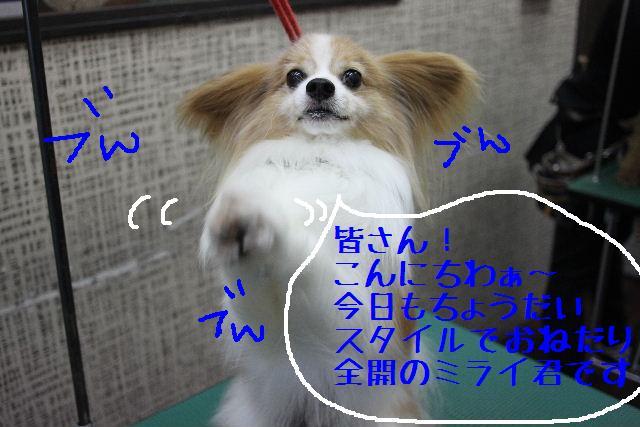 b0130018_23181261.jpg