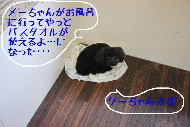b0130018_23195983.jpg