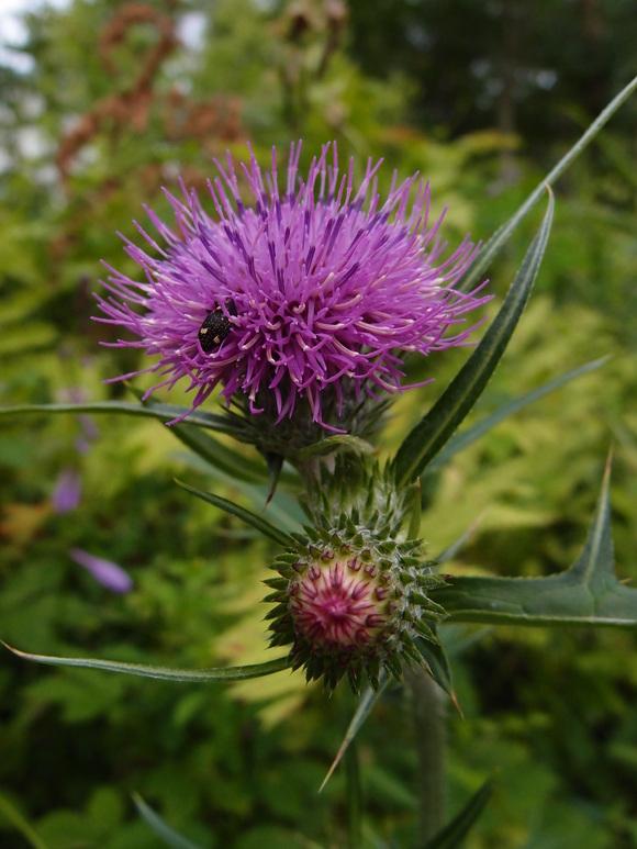 花や昆虫♪_f0158364_1345487.jpg