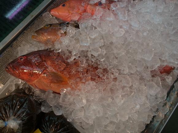 沖縄お魚の旅 その2 ~アカジンミーバイ~ 120810、12_c0237483_1702524.jpg