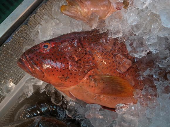 沖縄お魚の旅 その2 ~アカジンミーバイ~ 120810、12_c0237483_170559.jpg