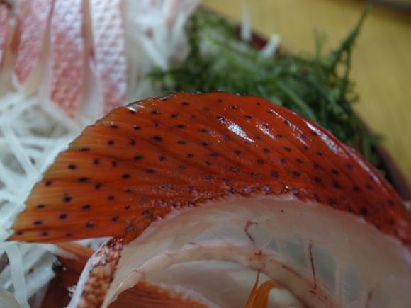 沖縄お魚の旅 その2 ~アカジンミーバイ~ 120810、12_c0237483_17123514.jpg