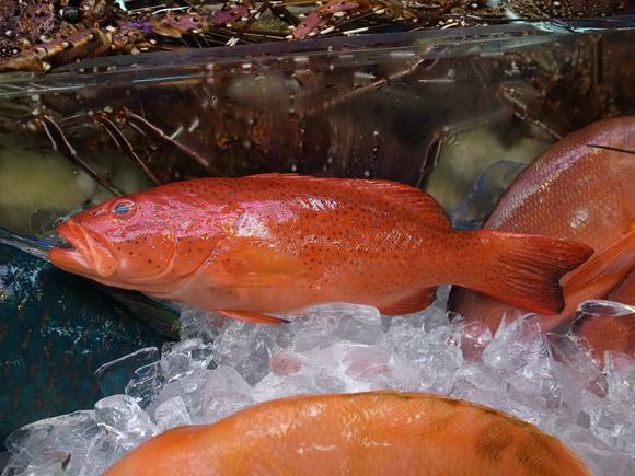 沖縄お魚の旅 その2 ~アカジンミーバイ~ 120810、12_c0237483_1724053.jpg