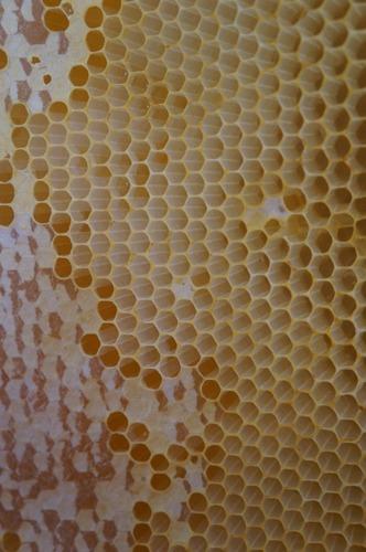 今年二回目のハチミツ集め_f0106597_1544631.jpg