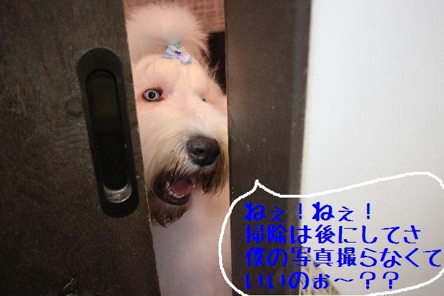 こんにちわぁ~~!!_b0130018_14473920.jpg