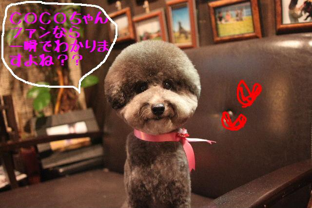 こんにちわぁ~~!!_b0130018_14492685.jpg