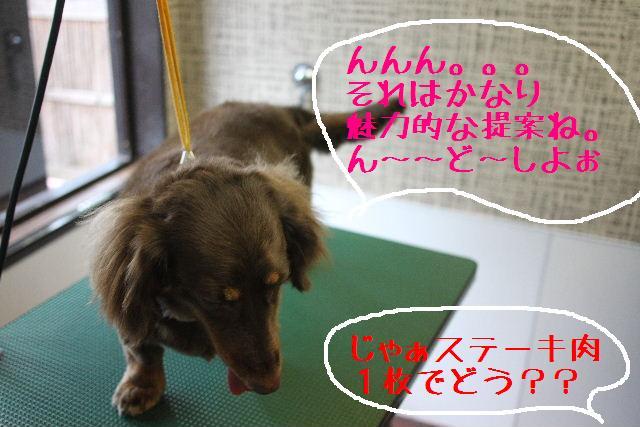 こんにちわぁ~~!!_b0130018_14505330.jpg