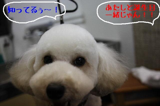こんにちわぁ~~!!_b0130018_1453923.jpg