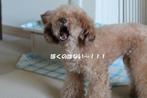 b0197418_1905128.jpg