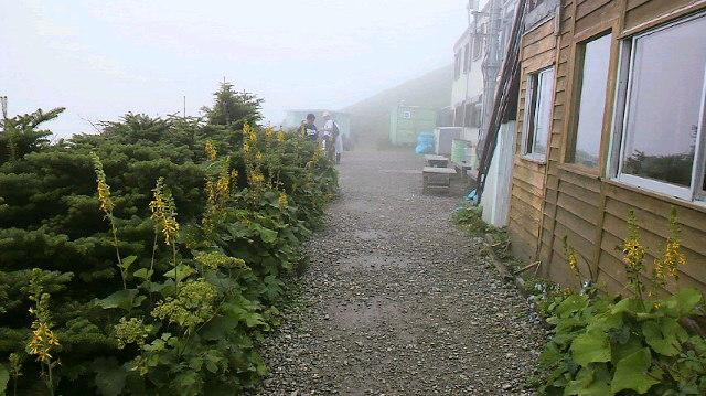 ヒュッテの庭は オタカラコウ花盛り。朝の気温14℃。宿泊のピークも一段落。_c0089831_2219353.jpg