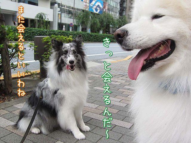新しいお友達_c0062832_254396.jpg