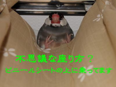 b0158061_2238346.jpg