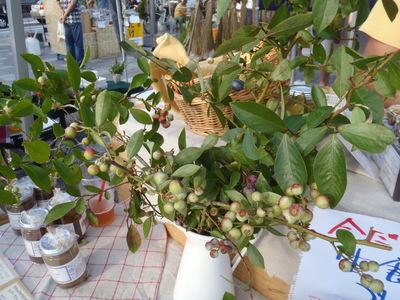 奈良オーガニックマーケット_b0252363_19503977.jpg