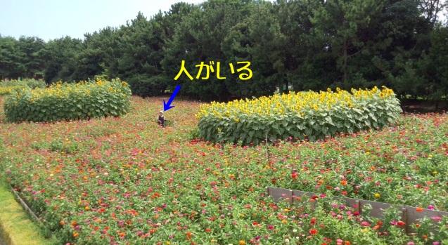 b0140270_8402919.jpg