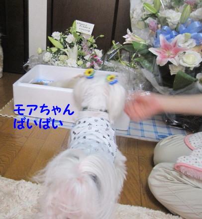b0193480_20363884.jpg